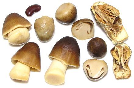11 главных полезных свойств соломенных грибов для здоровья