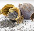 10 невероятных преимуществ маковых семян для тела и мозга