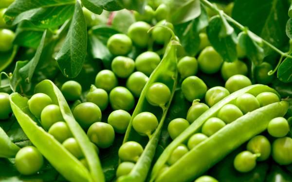 bitter green peas