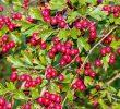 Польза лесных горьких ягод как лучшего антиоксиданта