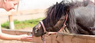 rosemary for horses