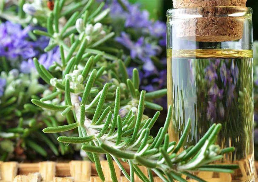 Польза от применения масла розмарина для лица