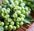 10 преимущества для здоровья турецкой ягоды во время беременности