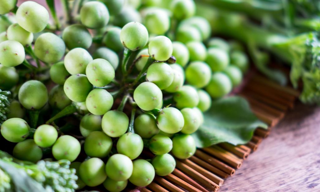 turkish berry