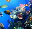 Замечательные преимущества морской жизни для людей