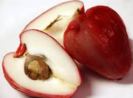 malay apple seeds