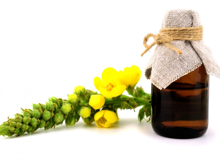 Как эффективно использовать масло муллейна для легких