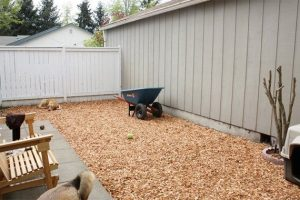 cedar and pine woods for dogs
