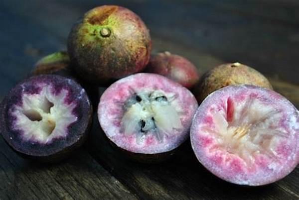 jamaican star apples