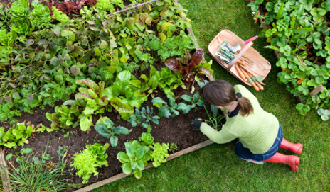 growing your own garden