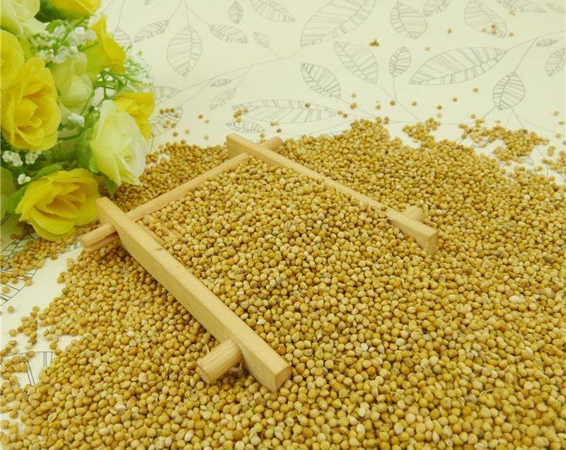 Сильные преимущества риса Варагу – просо Кодо